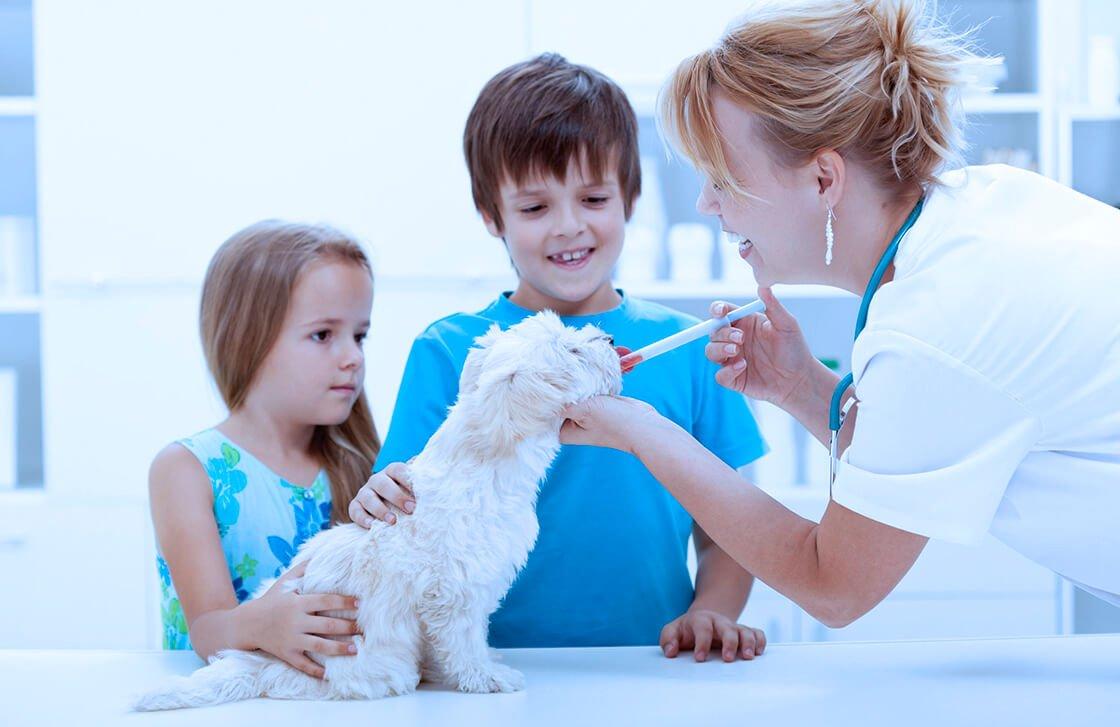 Diseño de páginas web para veterinarios